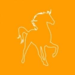HORSE CARE (6)